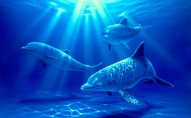 Dolphin paradise wall mural contemporary wall stickers for Dolphin paradise wall mural