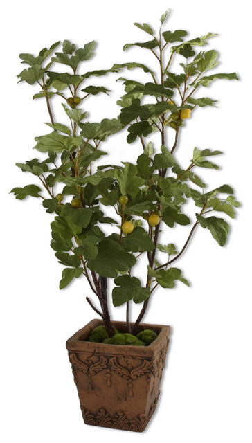 60049 Potted Young Fig Tree By Uttermost Modern Indoor