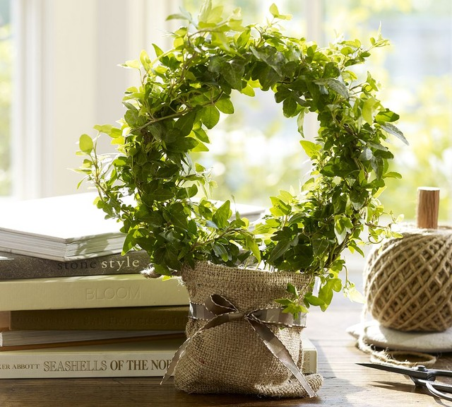 Live ivy topiary traditional plants by pottery barn for Indoor decorative live plants