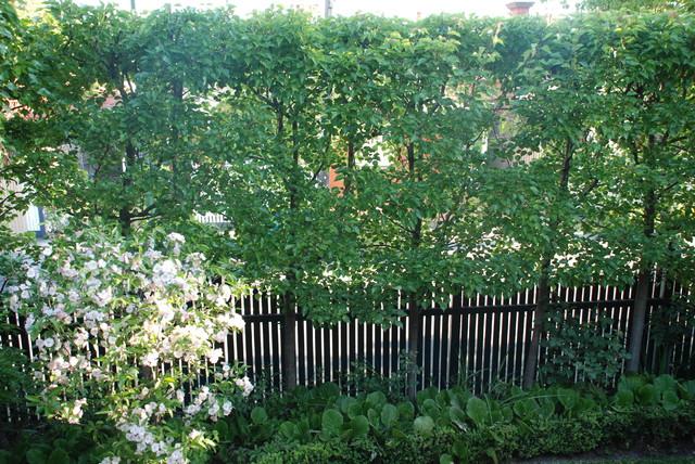 andrew renn design beautiful gardens of melbourne gaudi armchair sydney by bretz australia
