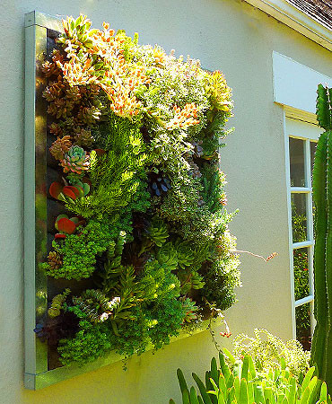FLORAFRAME Living Wall Kit - Modern - Outdoor Pots And Planters - by plantsonwalls.com