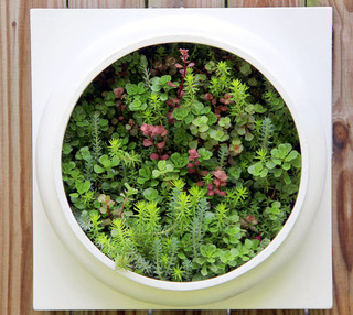 Living Wall Planter Comes Preplanted By Twisted Metals