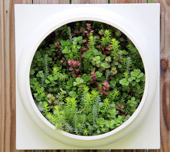 Living wall planter comes preplanted by twisted metals for Living wall planter