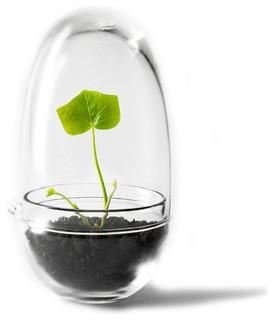 Grow Mini Gewächshaus - Modern - Terrariums - by AmbienteDirect.com