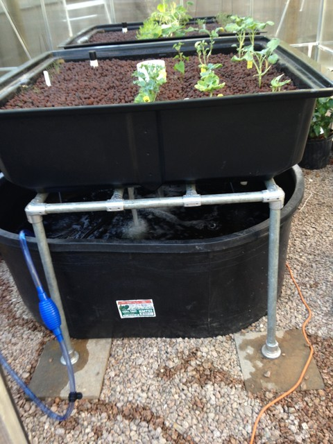 Aquaponics fish plants eclectic other by structure for Fish and plants in aquaponics