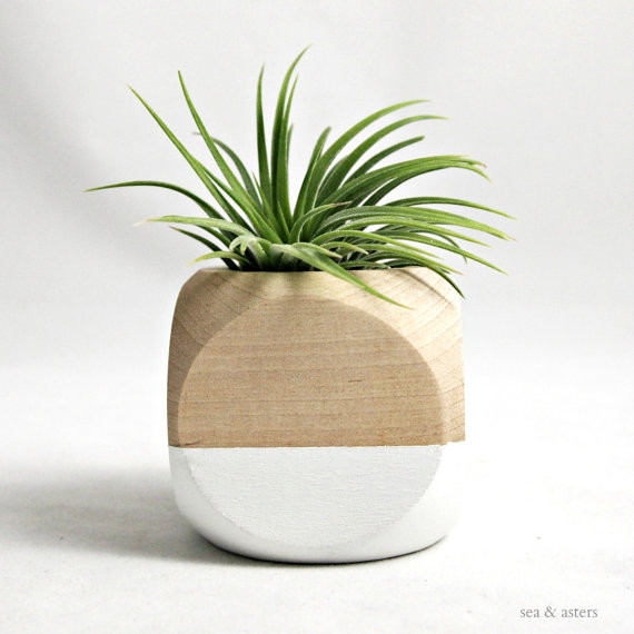Geometric Air Plant Cube Planter, Whitenatural By Sea. Lily Ann Cabinets. Cedar Shake Vinyl Siding. Industrial Decor. Master Bedroom Chandelier. Rustic Home Decor. Houzz Interior Design Ideas. Stair Pole. Beach Themed Bedrooms