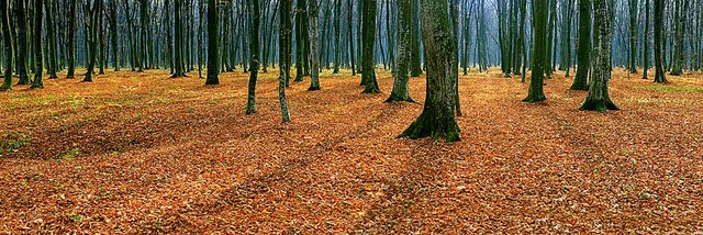 Autumn Forest Floor Panorama Wall Mural Self Adhesive