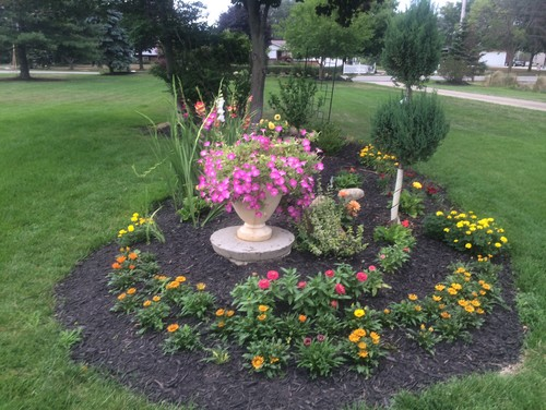 Landscaping Over A Septic Tank : My dad and i put in a bunch of annuals to brighten up the area until