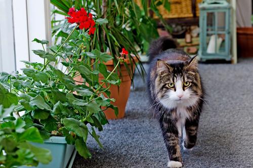 East London Cat Life
