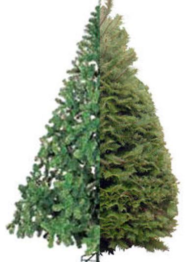 Christmas Tree: Real vs Artificial