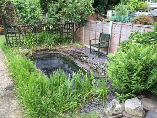 Pond Ideas And Advice