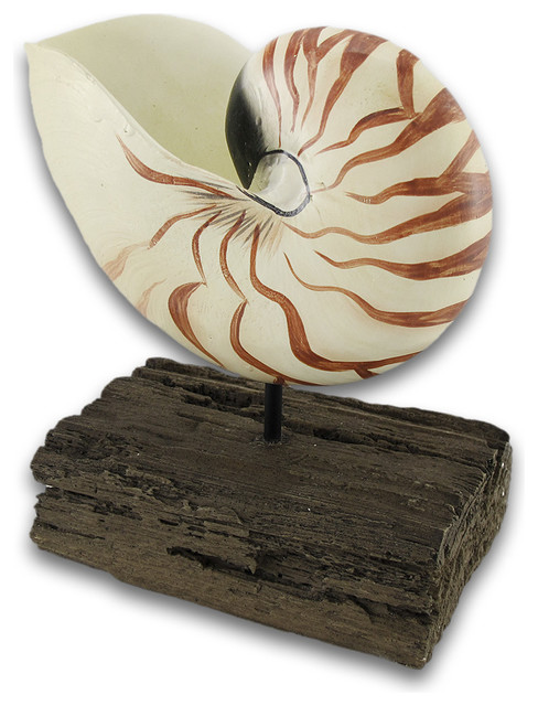 Mounted nautilus shell statue decoration eclectic for Nautilus garden designs