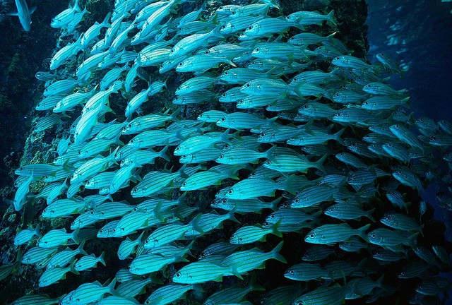 Bonaire Island School Of Fish Wallpaper Wall Mural