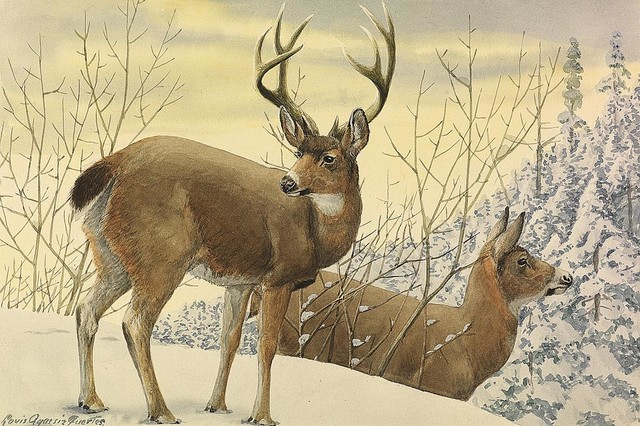 Black tailed deer wallpaper wall mural self adhesive for Deer wallpaper mural