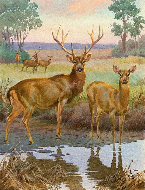 barasingha deer wallpaper wall mural self adhesive york wallcoverings 10 5 ft x 6 ft deer chair rail wall