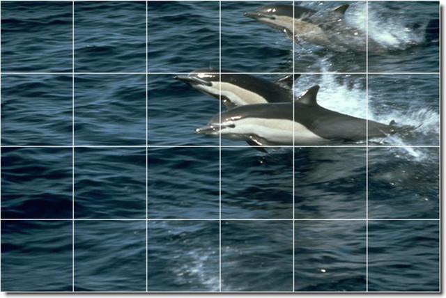 Dolphins whales photo backsplash tile mural 17 for Dolphin tile mural
