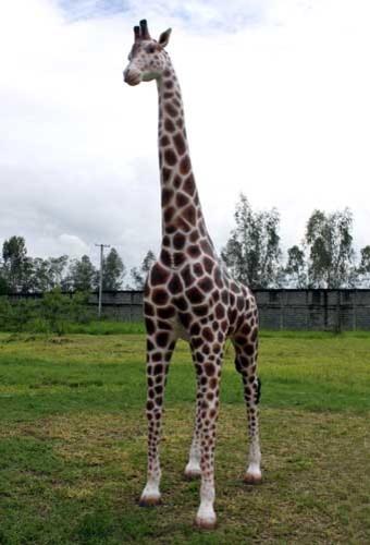 giraffe life size statue 12ft home decor dallas by giraffe animals home decoration related keywords
