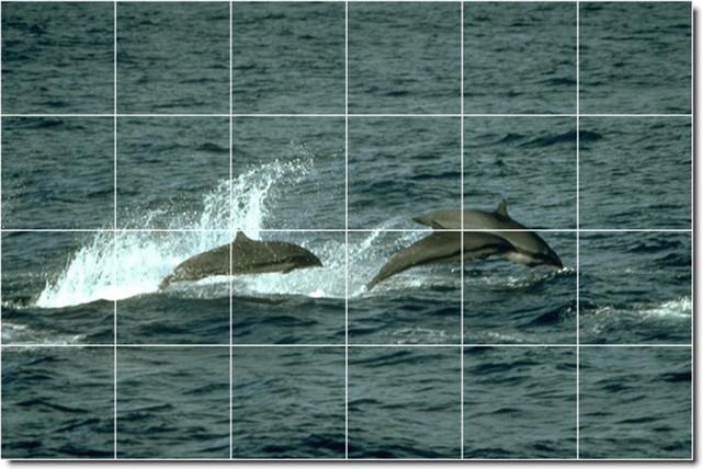 Dolphins whales photo backsplash tile mural 24 for Dolphin tile mural