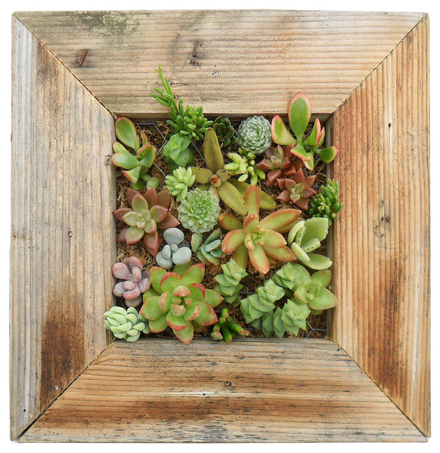 succulent living wall planter kit contemporary indoor pots and planters by uncommongoods. Black Bedroom Furniture Sets. Home Design Ideas