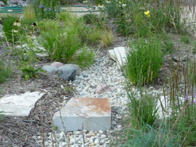 Rain garden chicago by design green landscapes for Home rain garden design