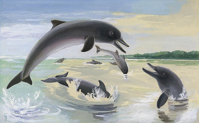 Dolphin Wallpaper For Walls : Dolphin Play Wallpaper Wall Mural - Self-Adhesive - Multiple Sizes ...