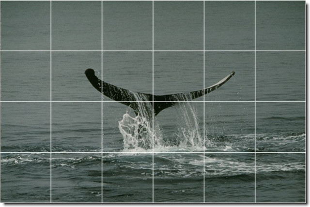 Dolphins whales photo kitchen tile mural 29 traditional for Dolphin tile mural
