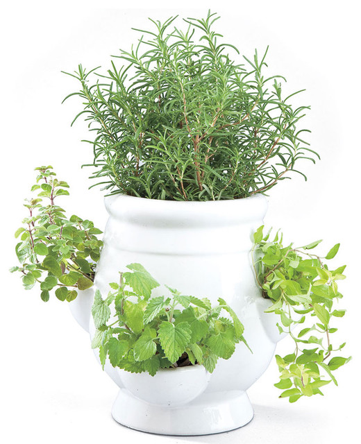 Indoor Window Sill Herb Planter Part - 34: Window Herb Garden Kit. Window Herb Garden Elizabeth Hayt