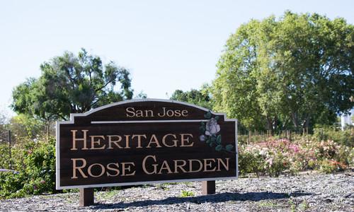 San Jose Heritage Rose Garden Part 1