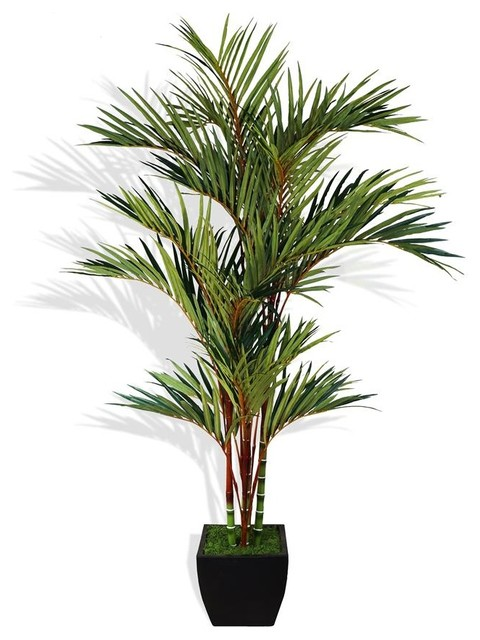 8 Ft. H Lipstick Red Palm Tree in Container - Tropical ...