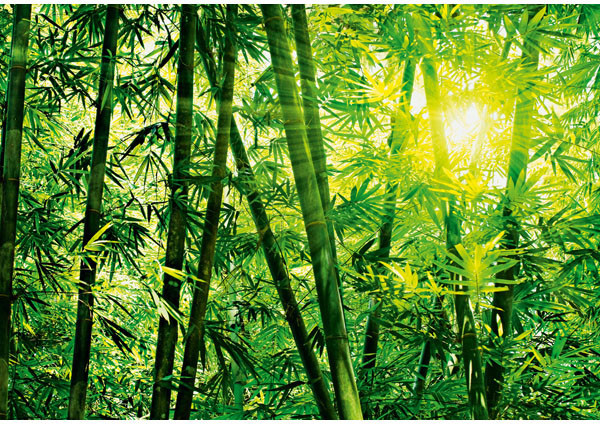 Bamboo forest wall mural asian wallpaper by brewster for Asian mural wallpaper