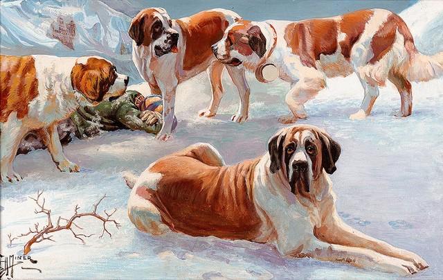 Saint Bernard Dogs Wallpaper Wall Mural