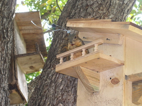 Squirrel home designs Home design and style