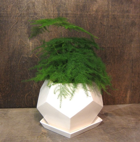 Geo planter small white by mgmy studio modern indoor for Modern indoor plants