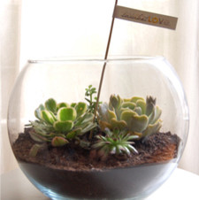 Large fish bowl planter eclectic plants by for Fish bowl with plant on top