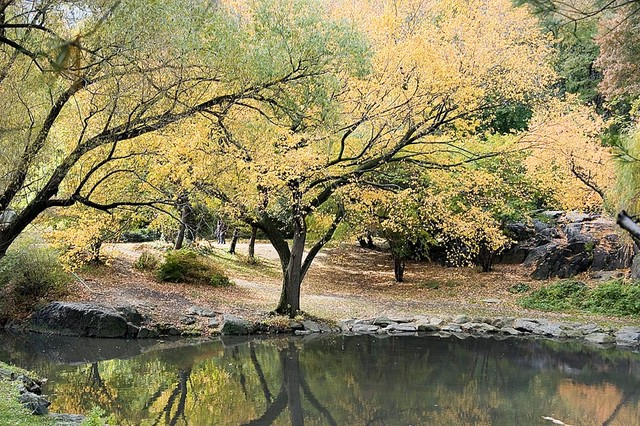 Central park trees in autumn wallpaper wall mural self for Central park mural
