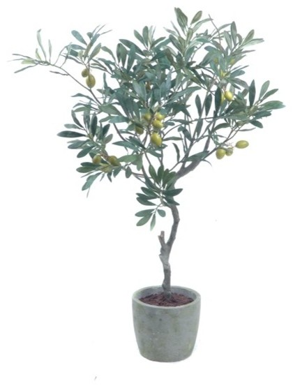 Olive Tree With Olives Potted Modern Plants By Gold