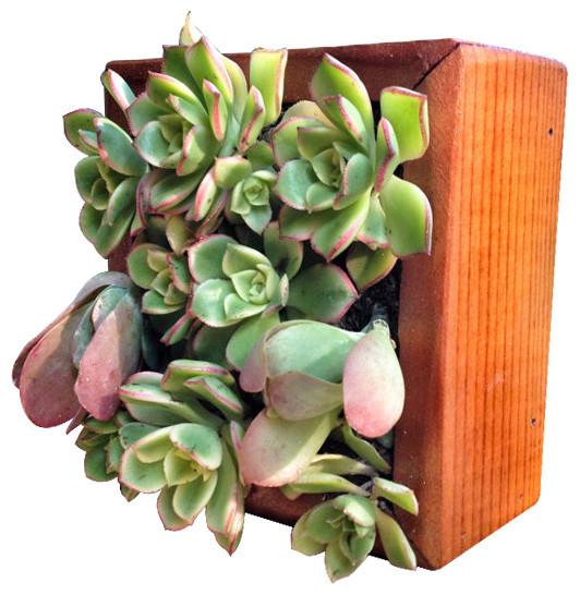 Vertical Succulent Reclaimed Wood Kit Rustic Indoor