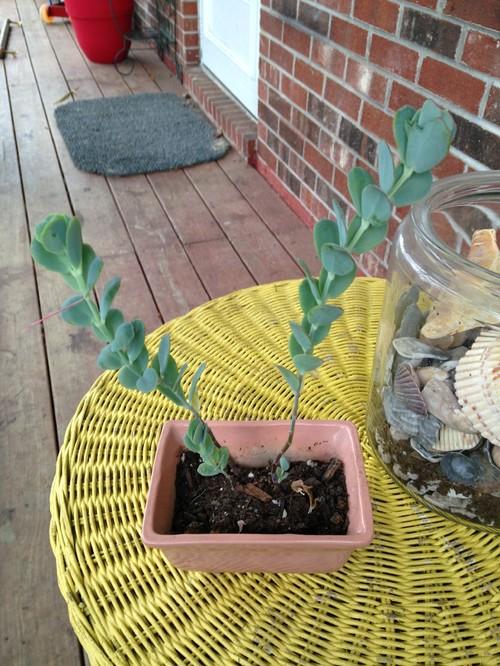 Help me id my baby for Help me design my garden