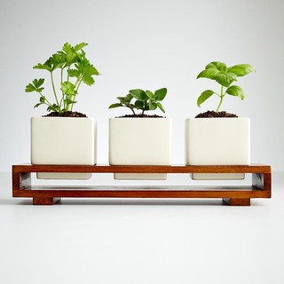 Culinary Herb Growing Kit - Modern - Indoor Pots And ...