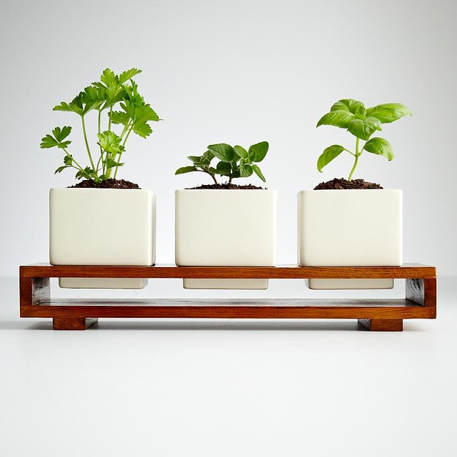 Culinary Herb Growing Kit - Modern - Indoor Pots And Planters - by RedEnvelope
