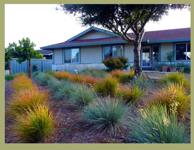 Grass garden for Contemporary garden grasses