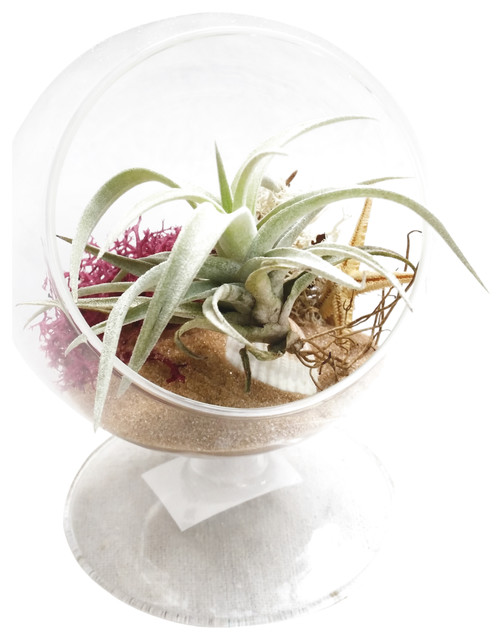 Brown circle christmas terrarium eclectic plants by for Indoor decorative live plants