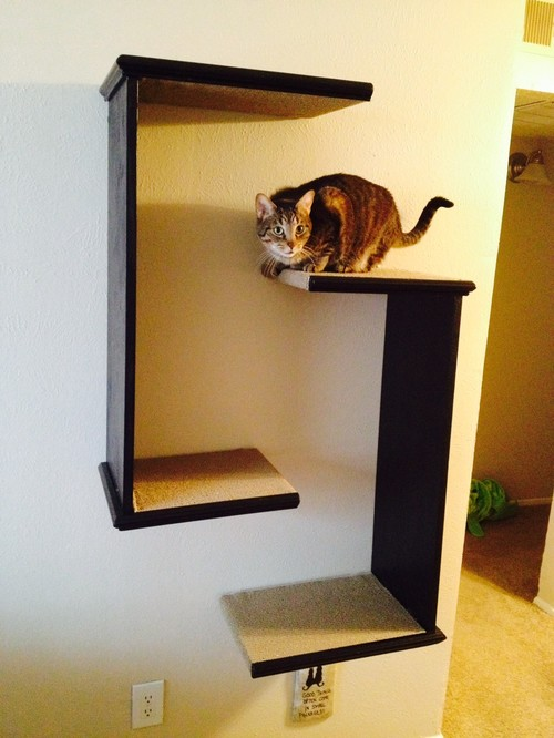 Cat Tree Shelves