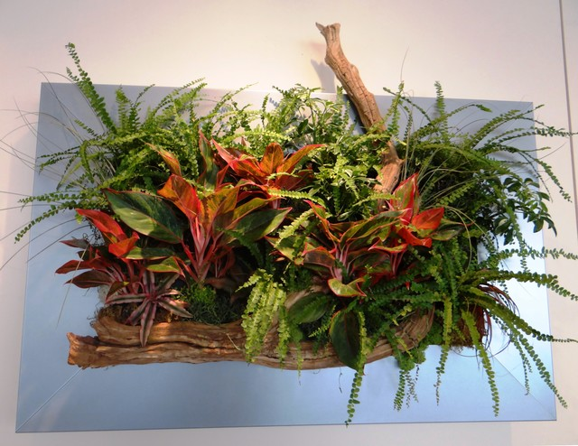 Livepicture remplant silver for Indoor decorative live plants
