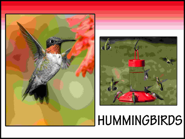 Hummingbird sign modern outdoor decor for Hummingbird decor