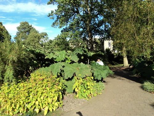 Growing gunnera in zone 5b ontario for Gardening zones ontario