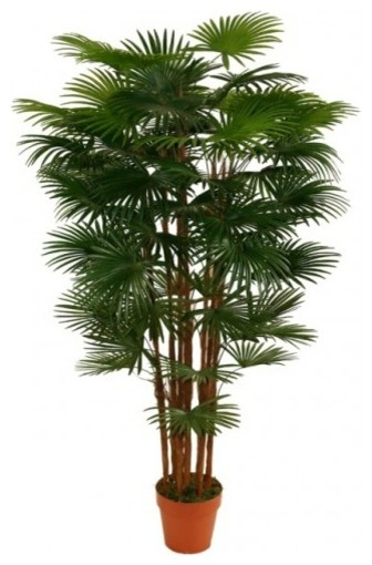 Fortunei Palm Artificial Plant Modern Flowers Plants And Trees Brisbane