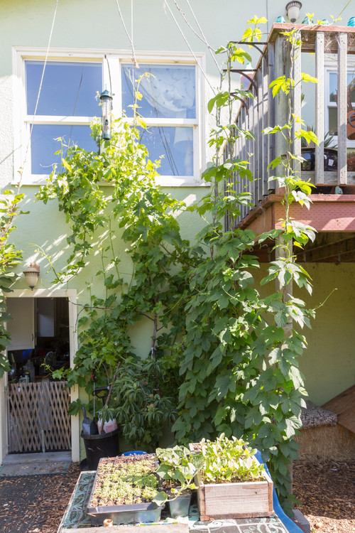 Urban Homesteading Oakland 1