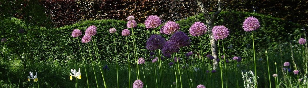 Nina baxter garden design ltd beckenham kent uk br33qq for Garden house design ltd