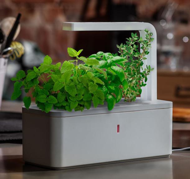 Mesmerizing Indoor Herb Garden Planters Indoor Herb Garden